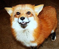Can Fennec Foxes Breed With Dogs