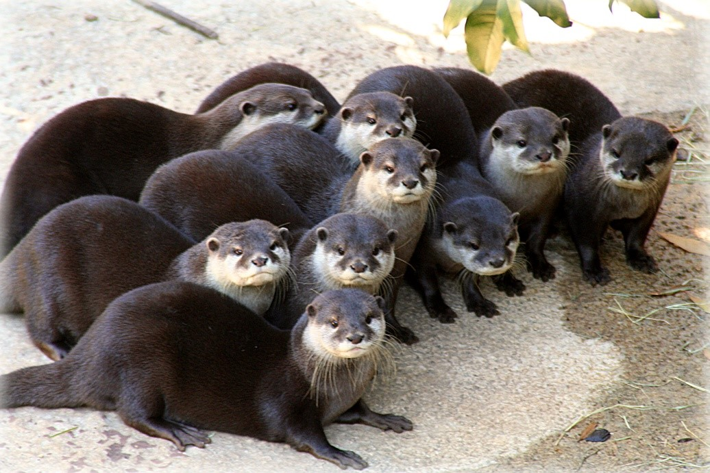 States Where Pet Otters Are Legal