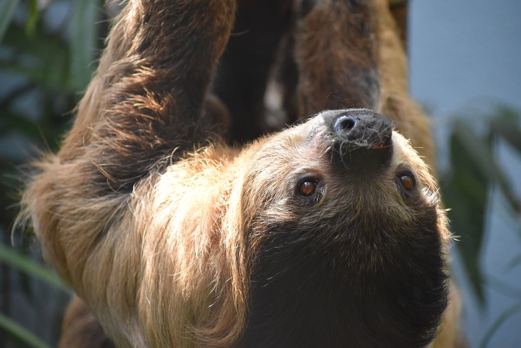 States Where Pet Sloths Are Legal